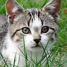 Kitten by flashcompact