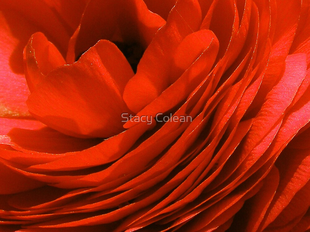 Lush orange by Stacy Colean