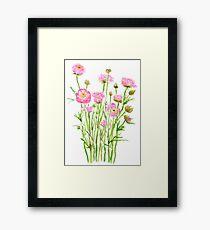 pink Ranunculus pink buttercup pink peony  Framed Print