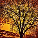 Tree silhouette by LudaNayvelt
