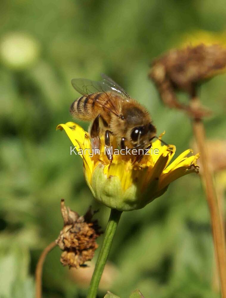 Busy bee by Karyn Mackenzie