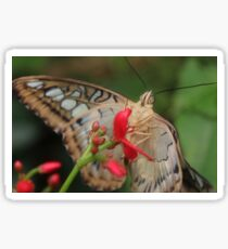 Macro butterfly - Pippa Collins Photography Sticker