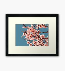Pink Flowers Blooming Peach Tree at Spring Framed Print