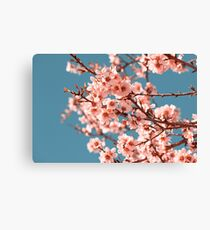Pink Flowers Blooming Peach Tree at Spring Canvas Print