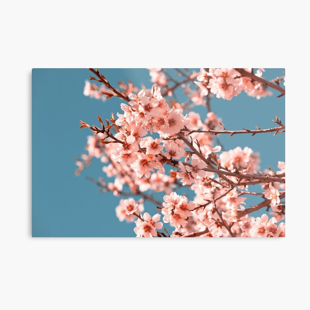 Rosa blühender Pfirsichbaum der Blumen am Frühling Metallbild