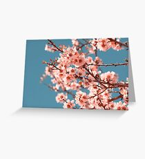 Pink Flowers Blooming Peach Tree at Spring Greeting Card
