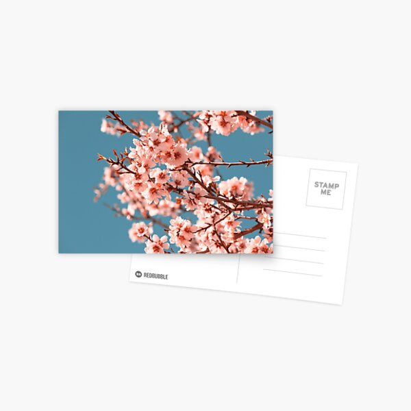 Pink Flowers Blooming Peach Tree at Spring Postcard