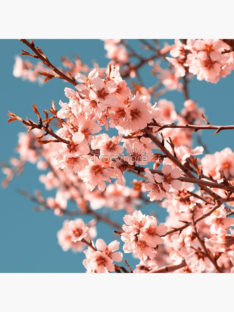 Pink Flowers Blooming Peach Tree at Spring by dvoevnore