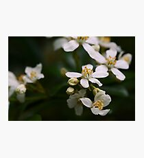 Macro flowers - Pippa Collins Photography Photographic Print