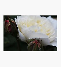 Macro rose - Pippa Collins Photography Photographic Print