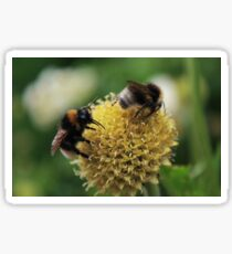 Bees - Pippa Collins Photography Sticker