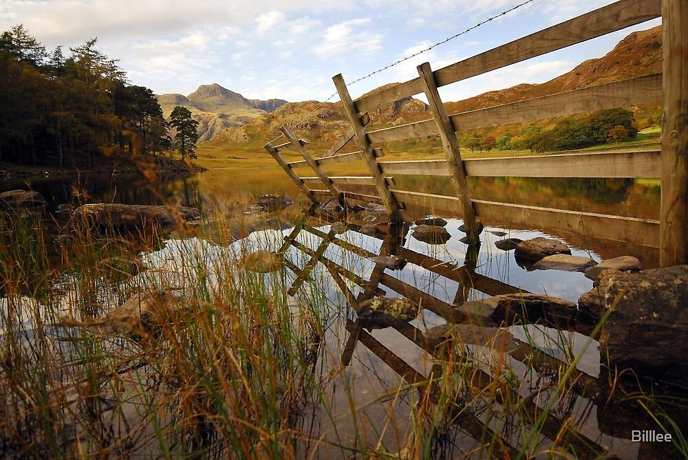 Reeds in Blea Tarn. by Billlee