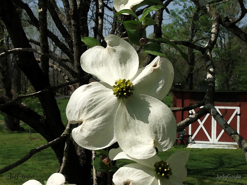 The Dogwood Bloom by Judy Gayle Waller