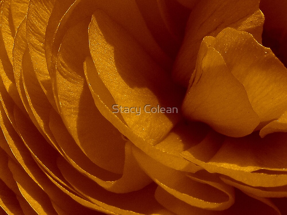 Timeless by Stacy Colean