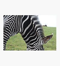 Zebra Portrait - Pippa Collins Photography Photographic Print