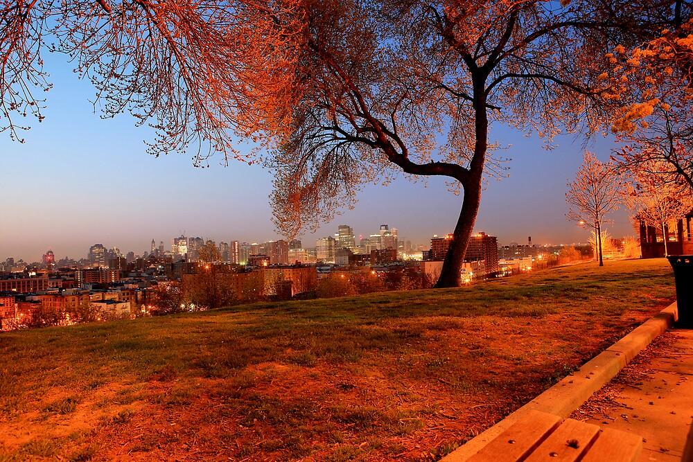 Urban Nature ! by pmarella