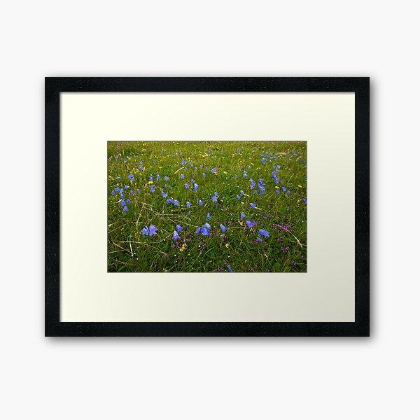 A sea of Harebells, Rossbeg, Co Donegal Framed Art Print