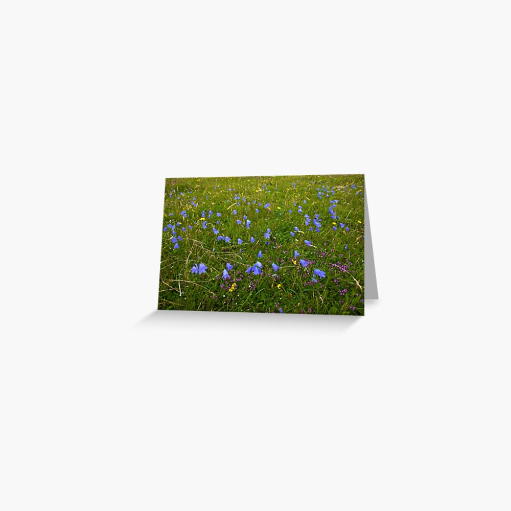 A sea of Harebells, Rossbeg, Co Donegal Greeting Card