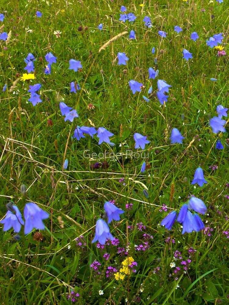 A sea of Harebells, Rossbeg, Co Donegal by VeryIreland