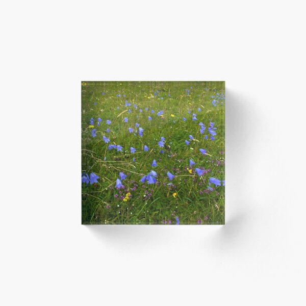 A sea of Harebells, Rossbeg, Co Donegal Acrylic Block