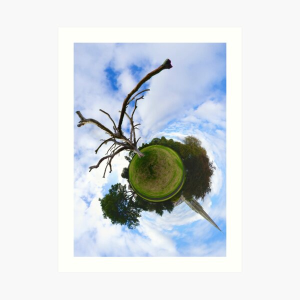 Dead Elm Tree in Brooke Park, Derry Art Print