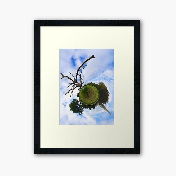 Dead Elm Tree in Brooke Park, Derry Framed Art Print