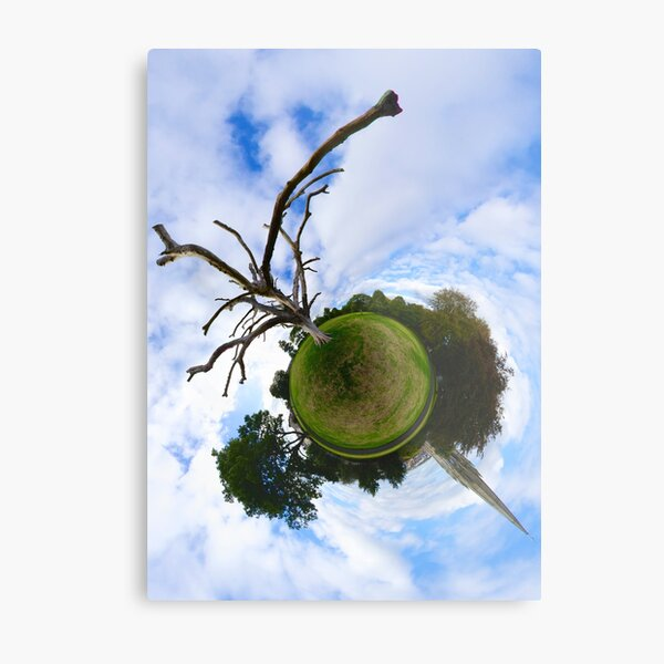Dead Elm Tree in Brooke Park, Derry Metal Print