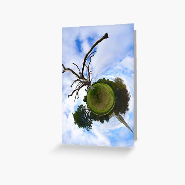 Dead Elm Tree in Brooke Park, Derry Greeting Card