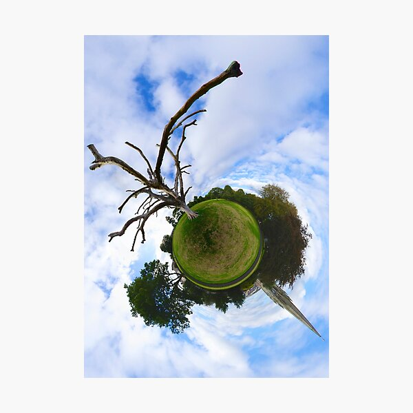 Dead Elm Tree in Brooke Park, Derry Photographic Print