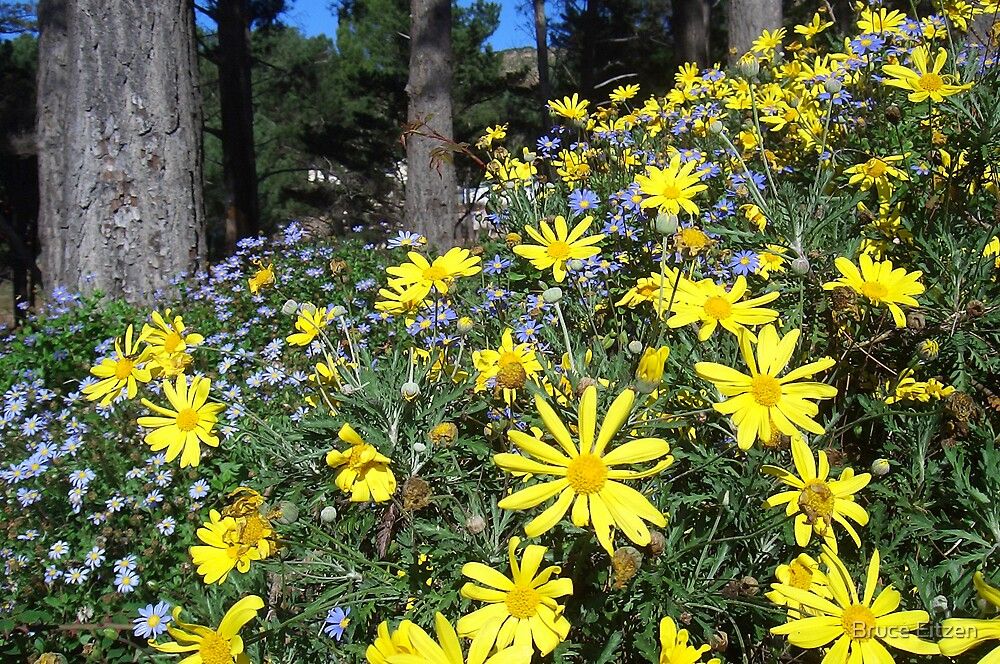 Yellow and blue daisies by Bruce Eitzen