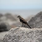 Bird On A Rock By The Sea by Cynthia48