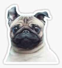 happy pug Sticker