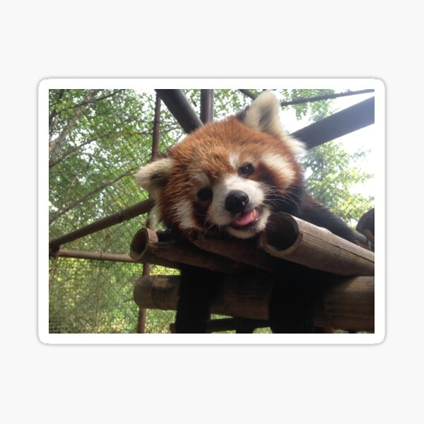 Sleeping Panda Sticker Die Cut Decal jdm drift lazy