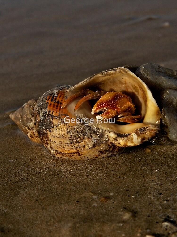 Hermit Crab on Fahan Beach by VeryIreland