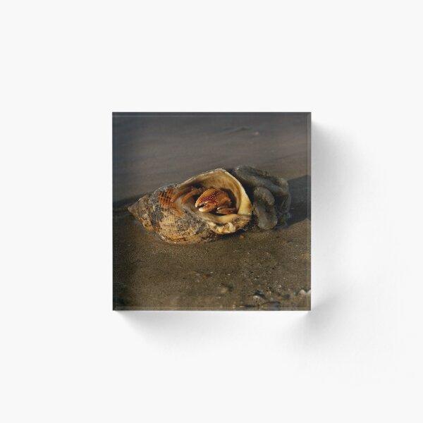 Hermit Crab on Fahan Beach Acrylic Block
