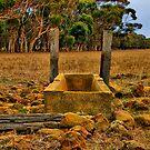 """Dry Stony Ground"" by Phil Thomson IPA"