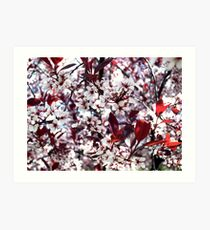 Ornamental Cherry  Art Print