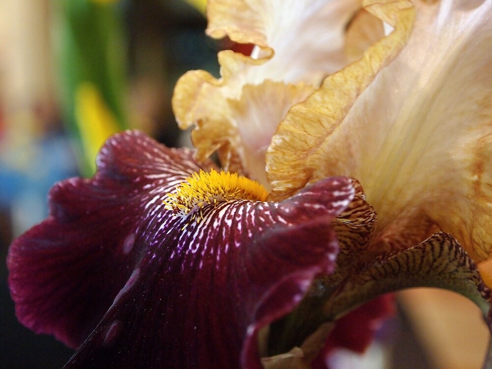 Abstract Iris by Douglas E.  Welch