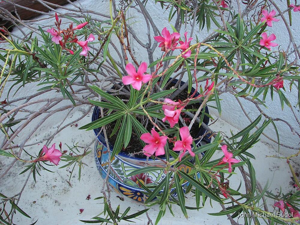 Pot of Pink by John Michael Sudol