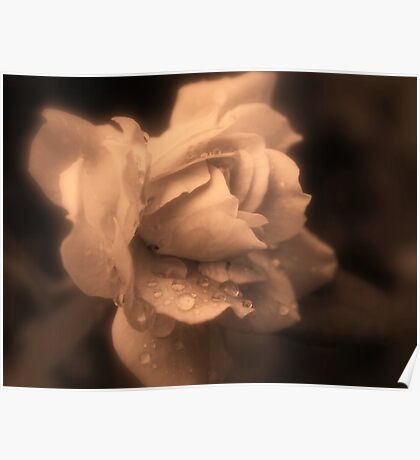 Monochrone Rose Poster