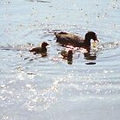 ducks at fountains abbey by dougie1
