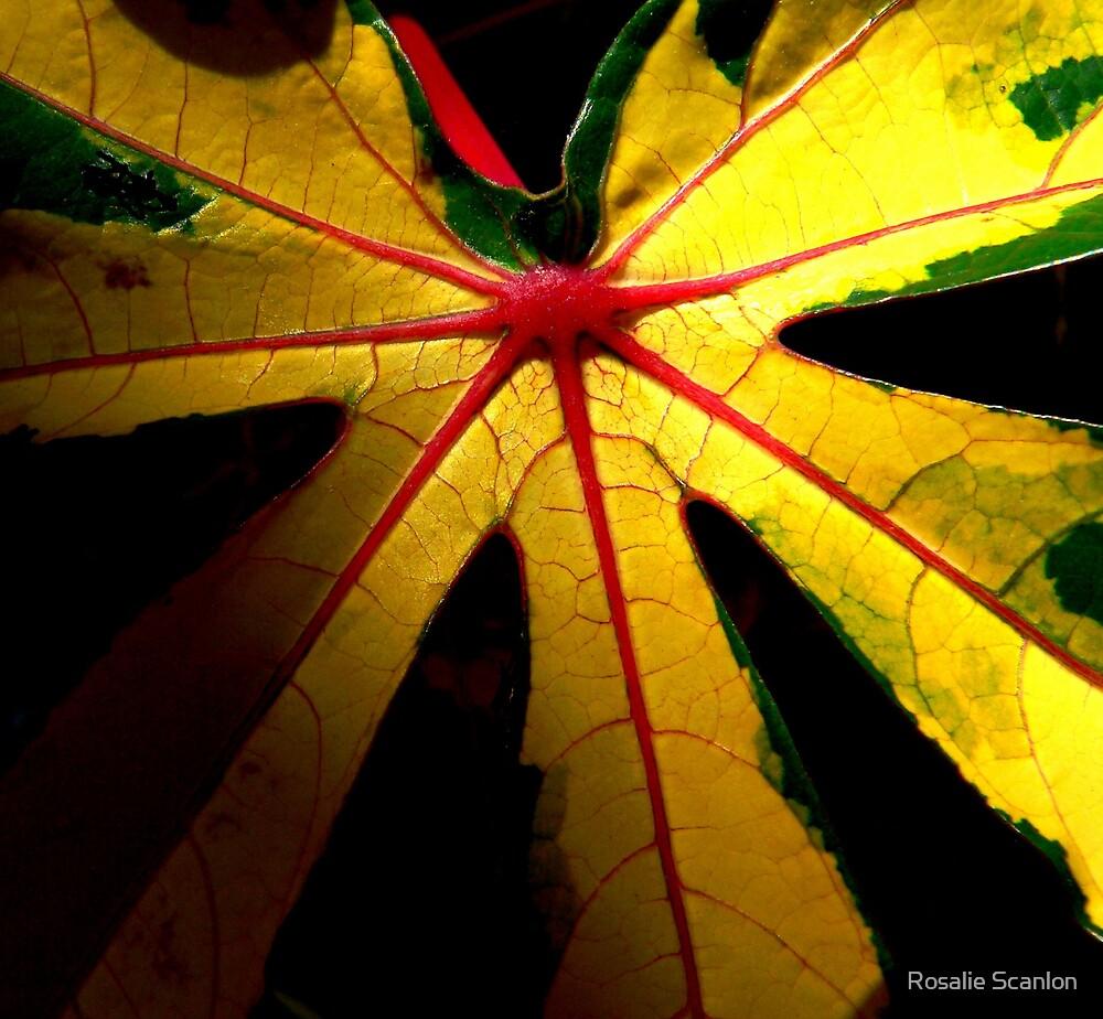 Golden Leaf by Rosalie Scanlon
