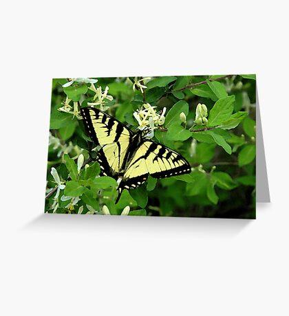 Honeysuckle Spring Greeting Card