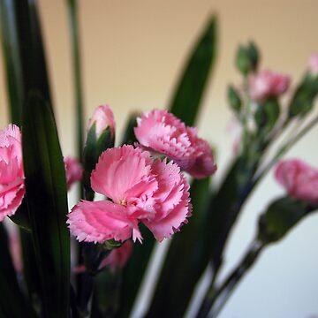 Pink Blossom by monzastar