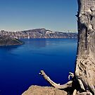 Overlooking Crater lake by Barbara  Brown