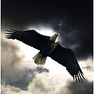 Soaring Eagle in Stormy Skies by NaturePrints