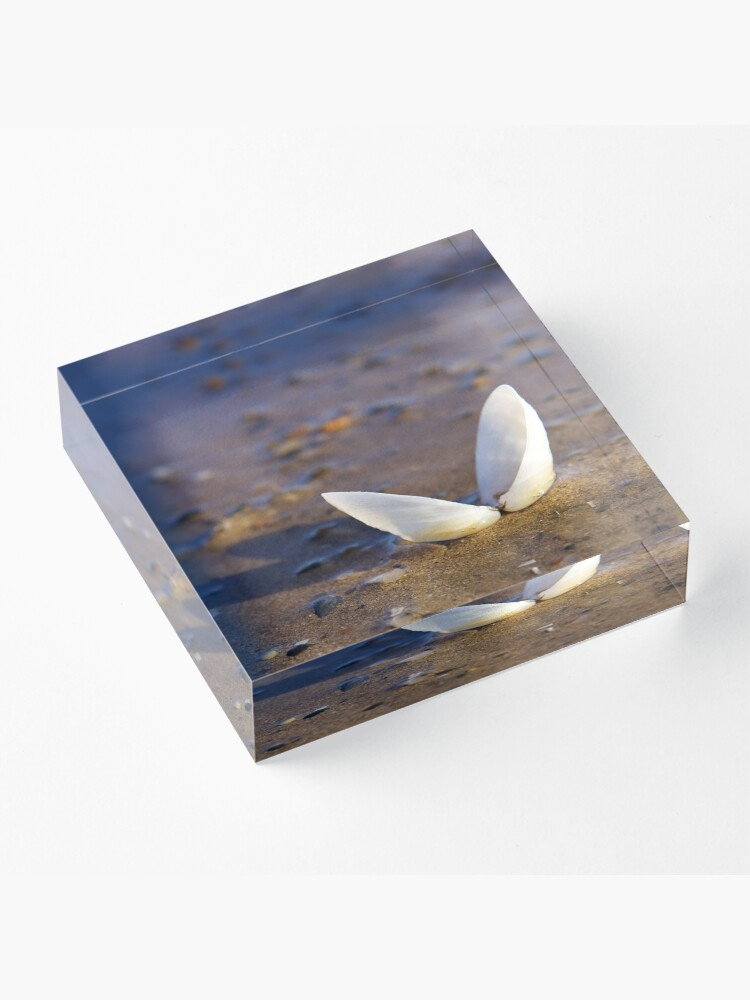 Alternate view of Cockle Shell  in Evening light at Fahan Acrylic Block