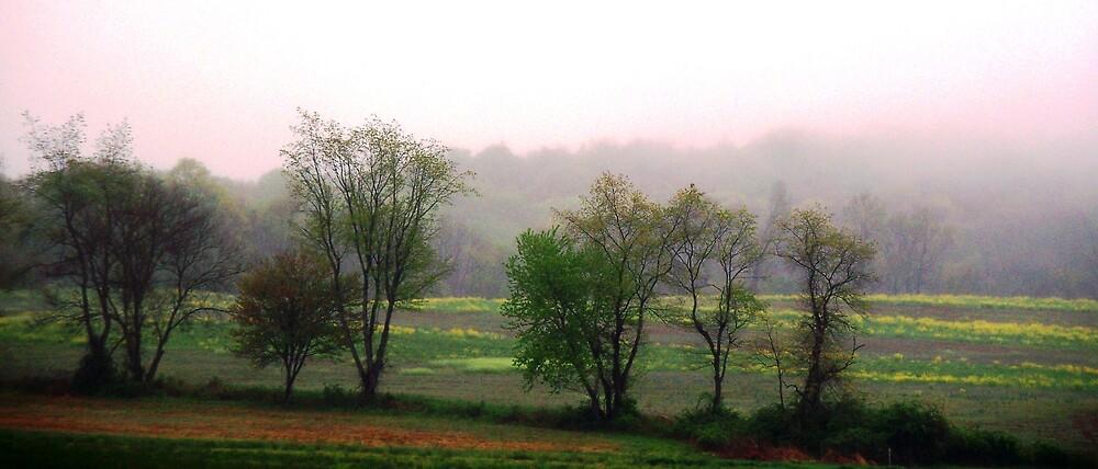 Foggy Morning  by Judi Taylor