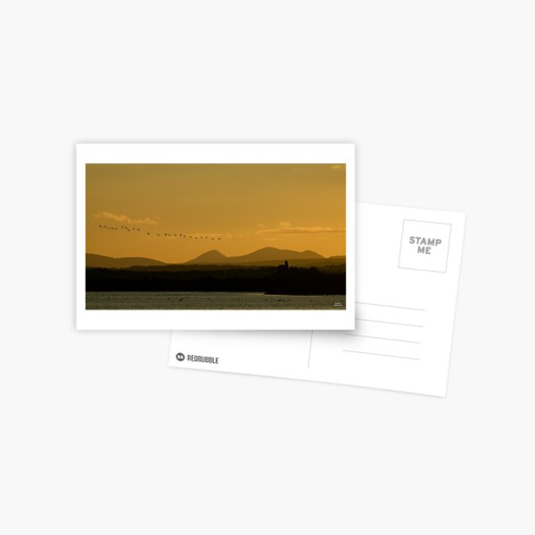 Geese over Derryveagh mountains at Twilight Postcard