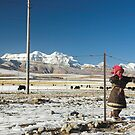 Tibetan Girl by Hugh Chaffey-Millar